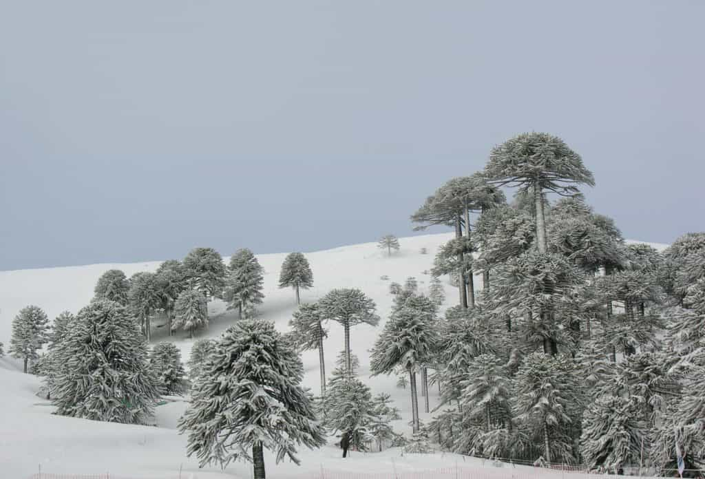 Big Snow arrived Lake Volcano District South America